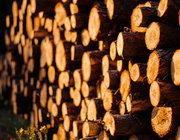 林作新:从东到西——中国的木材供应