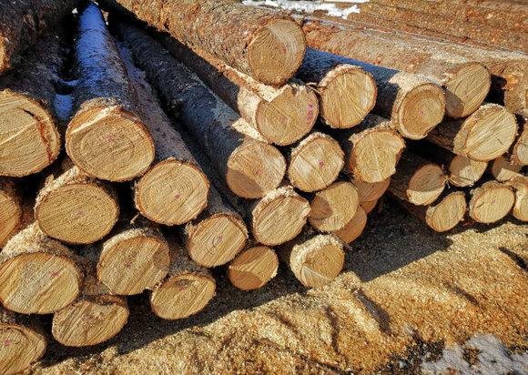 2018全球木材消费量增长2.1%