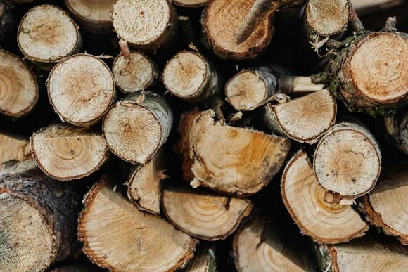 需求回暖,美国五大硬木价格均上涨,出口形势几何?