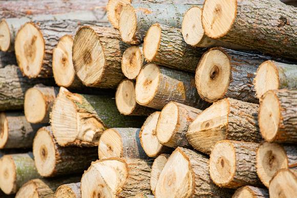 美国硬木出口
