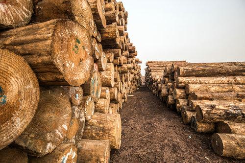 2018年12月中国木材市场价格指数(TPI)报告发布